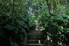 Scala circondate dalle piante Fotografia Stock Libera da Diritti