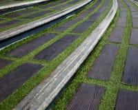 Scala con erba Immagini Stock Libere da Diritti