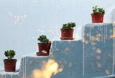 Scala con le piante Fotografia Stock