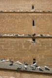 Scala del piccione Fotografia Stock