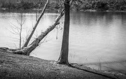 Scala dell'albero del parco e corda dell'oscillazione in bianco e nero Fotografia Stock