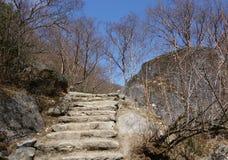 Scala delle pietre nella foresta di primavera Immagine Stock
