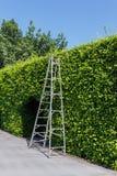 Scala di alluminio con verde della parete Immagini Stock