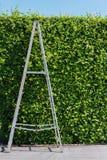 Scala di alluminio con verde della parete Fotografia Stock Libera da Diritti