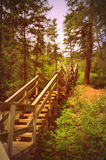 Scala di legno in foresta Fotografia Stock