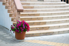 Scala di marmo con l'inferriata ed il giardino floreale fotografia stock libera da diritti