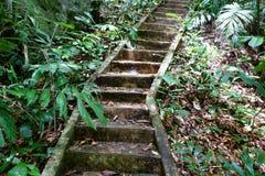 Scala di pietra in foresta Fotografia Stock