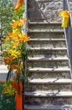 Scala e fiori gialli fotografia stock
