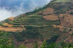 Scala a libretto piantata sulla collina con nebbia nei precedenti di estate nel PA del Sa, Vietnam Immagine Stock