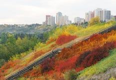 Scala nel cespuglio di autunno Fotografia Stock Libera da Diritti