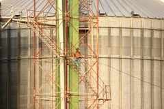Scala rampicanti dell'operaio di agricoltura sullo scomparto del granulo Fotografia Stock Libera da Diritti
