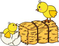 Little chicks with bale of hay Stock Photos