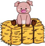 Little pig up on bale of hay Stock Photo