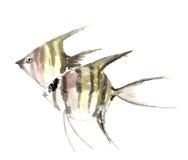 Scalaire peint à la main décoratif magnifique distingué traditionnel chinois de poissons d'encre-ange Illustration Stock