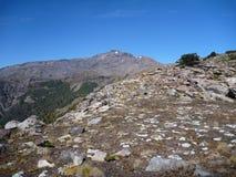 Scalando al picco del Nevada di sierrra in araucarias di las Fotografia Stock Libera da Diritti