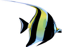 Scalar fish Stock Image