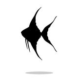 Scalare fish black silhouette aquatic animal. Vector Illustrator.r Stock Images