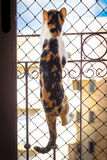 Scalata del gattino Immagini Stock