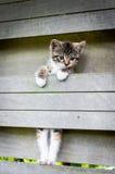 Scalata del gattino di un recinto Immagini Stock Libere da Diritti