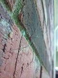 Scalata del ragno Fotografie Stock Libere da Diritti