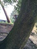 Scalata dello scoiattolo Immagine Stock Libera da Diritti