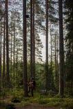 Scalatore dell'albero su in un albero con l'ingranaggio rampicante Fotografia Stock