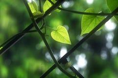 Scalatore sulla griglia di finestra Fotografia Stock Libera da Diritti