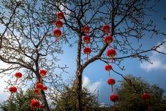 Scaldfish cinesi del glim della lanterna di festival di molla Fotografia Stock Libera da Diritti