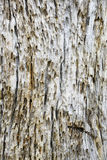 Scale Bark background Royalty Free Stock Photography