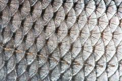 Scale dei pesci Fotografie Stock