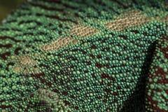 Scale del camaleonte Fotografia Stock