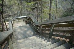 Forest Stairs Immagini Stock Libere da Diritti