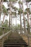 Scale di legno Immagine Stock