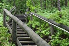 Scale di legno che conducono a partire dall'allerta Fotografia Stock Libera da Diritti