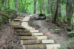 Scale di legno nella foresta Sigulda Immagini Stock Libere da Diritti