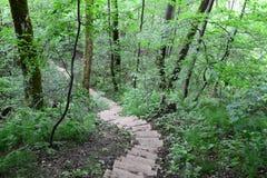 Scale di legno nella foresta Sigulda fotografie stock libere da diritti