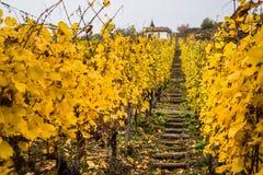 Scale di legno nelle vigne dell'Alsazia in autunno, vista orizzontale Fotografia Stock Libera da Diritti