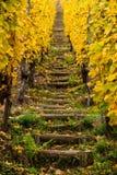Scale di legno nelle vigne dell'Alsazia in autunno, vista verticale Fotografia Stock