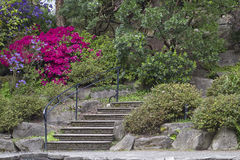 Scale di pietra al giardino del rododendro Fotografie Stock Libere da Diritti