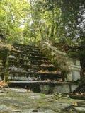 Scale di pietra che conducono nella foresta fotografia stock