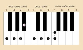 F major scale fingering for piano. Scale and fingering of F major scale on piano for education or every application Stock Images