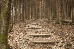 Scale in mezzo alla foresta Fotografia Stock