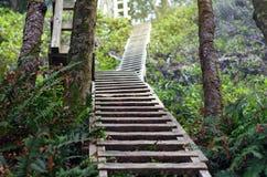 Scale nella traccia della foresta Immagine Stock Libera da Diritti
