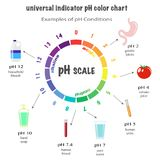 Scale of ph value for acid and alkaline solutions. Infographic acid-base balance. scale for chemical analysis acid base. Examples of pH conditions Royalty Free Stock Photo