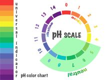 Scale of ph value for acid and alkaline solutions,. Infographic acid-base balance. scale for chemical analysis acid base.  illustration isolated  or white Stock Image