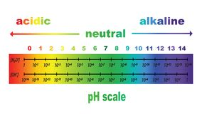 Scale of ph value for acid and alkaline solutions Stock Images
