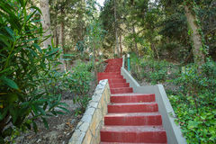 Scale rosse nel parco Fotografia Stock