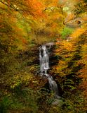 Autumn at Scaleber Force near Settle, North Yorkshire stock photos