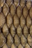 Scales. Detail view of a fish's body royalty free stock photos