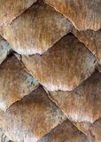Scales av spruce kottar Royaltyfria Foton